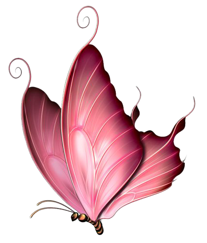 1270150-pink-butterfly-png-image-pink-butterfly-png-png-427_500_preview